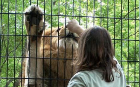 zoo animals behaviour management and welfare pdf