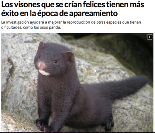 In Spanish, with a real mink