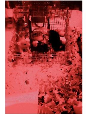Xmas Eve mice