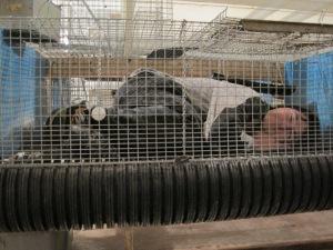 Jamie sleeping in EE cage