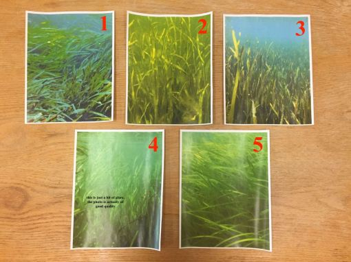 Grass images for tank walls